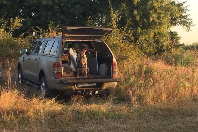 The summer roebuck hunting in Hungary has come to an end